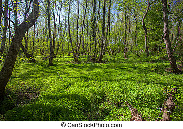 Beautiful green spring forest landscape