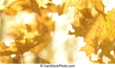 Natural background. Sun shining throw leaves in autumn forest.