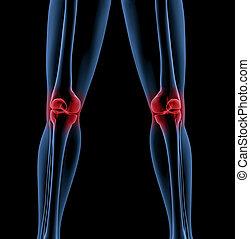 medico, gambe, scheletro