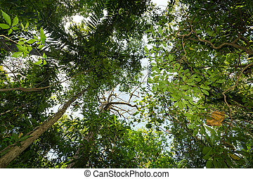 tree tops in the rain forrest north sulawesi, indonesia -...