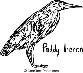 paddy heron - vector illustration sketch hand drawn with...