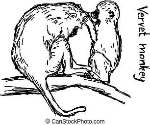 vervet monkey family - vector illustration sketch hand drawn...