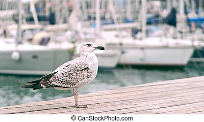 Seagull standing on the pier against blurred sailboats