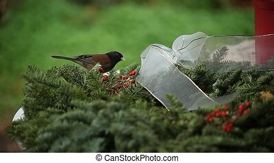 one bird chases another - one dark-eyed junco chases another...