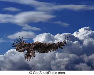 The eagle soars above the clouds high in the sky