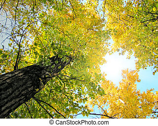 autumn foliage view from below tree leaf nature forest