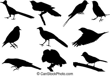 Cuckoo Silhouette vector illustration