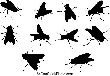 Fly Silhouette vector illustration