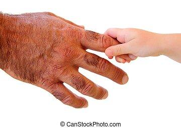 pequeno, criança, mão, segurando, cabeludo,...