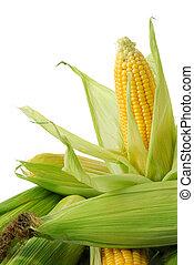 Corn on cob - Fresh corn cobs closeup
