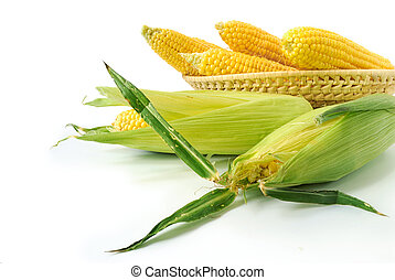 Fresh corncobs - Fresh corn cobs in a basket on white...