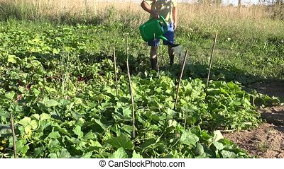 male country boy with watering can pour water on cucumber vegetable plants in farm plantation.