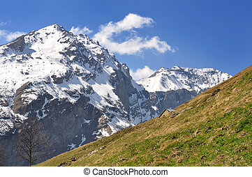 mountain in spring - snowy peak mountain behind meadow in...
