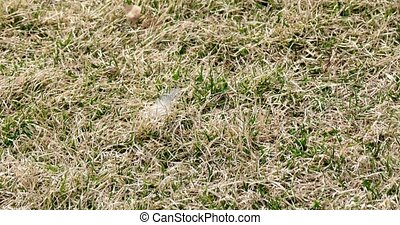 Grass moving camera shot top position