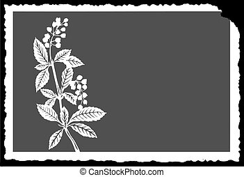 vector drawing of the plant