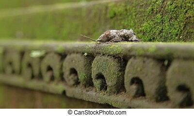 Ants eat something on mossy decorative stone.