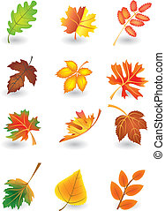 Vector  leaves - Vector set of autumn leaves for design