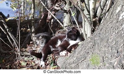 Little Kitten plays with tail, cat is dozing in sun