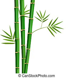 Fresh bamboo tree and leaves isolated on white background....