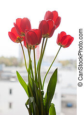 Red tulips on window