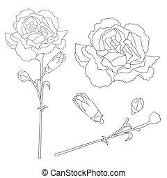 Dianthus caryophyllus Outline - Carnation Flower, Clove...
