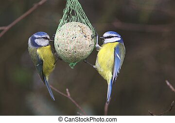 Garden birds feeding