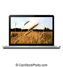 Laptop with wheat field on screen