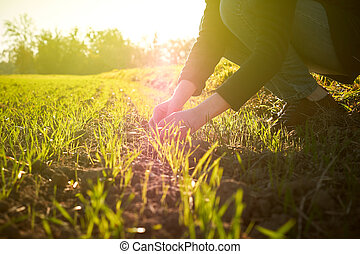 Woung agriculture woman biologist inspecting the harvest -...