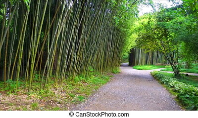Moving by the bamboo path at botany garden
