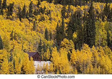 Golden Aspen Trees - The golden aspen trees of a Colorado...