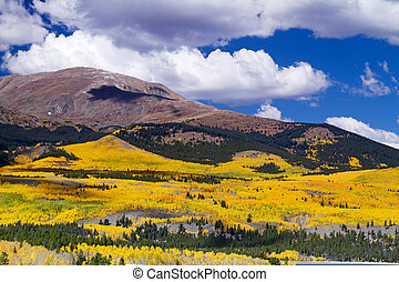Mt. Elbert Autumn - Autumn aspen tress on the slopes of Mt....