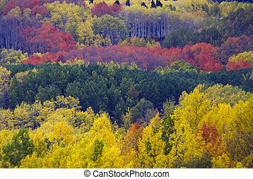 Autumn View from Kebler Pass Road in Colorado near Crested...