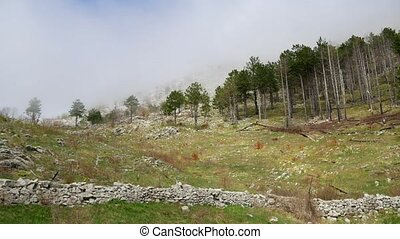 Thick fog in the forest and in the mountains in the village...