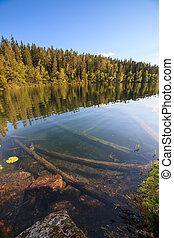 Forest lake in Finland at summer
