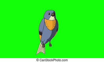 Blue Bird Sitting and Singing. Animated Motion Graphic...