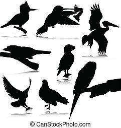 bird black silhouettes