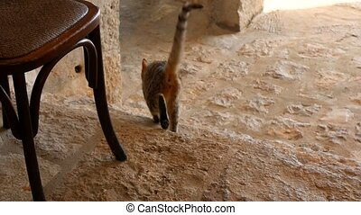 Cats in the old town of Budva, Kotor, Dubrovnik. Croatia and...