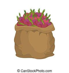 Beet Burlap bag. sack of vegetables. big crop on farm....