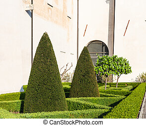 Trimmed cypress tree in Mantua city in spring - travel to...