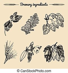 Vector set of vintage herbs elements of brewery.Hand...