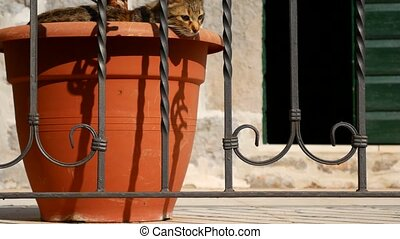 The cat sleeps in flower pot - The cat sleeps in a flower...