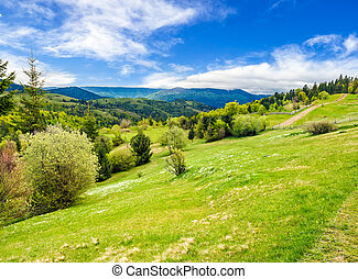 forest on a mountain hillside in rural area - composite...
