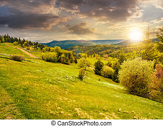 forest on a mountain hillside in rural area at sunset -...