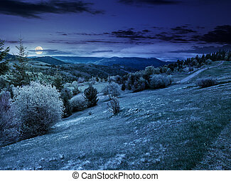forest on a mountain hillside in rural area at night -...