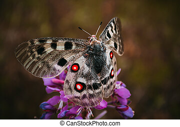 Butterfly on the color with red spots on wings