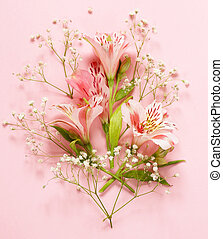 Spring flowers (alstroemeria) on a pink background