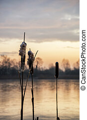 Stunning colorful Winter sunrise over reeds on lake in...