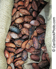 cocoa beans background - Raw roasted cocoa beans background