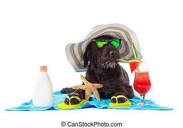 Black mutt dog posing with colorful cocktail. - Black mutt...