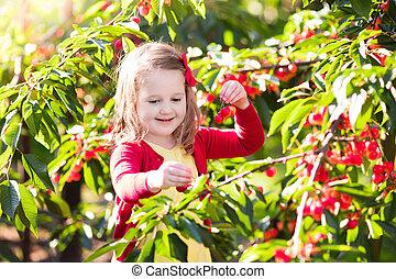 Little girl picking cherry in fruit garden - Kids picking...